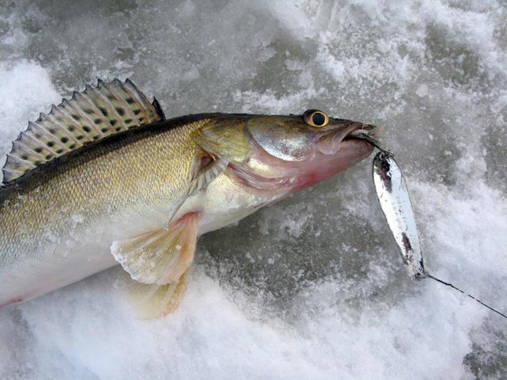 Чем завершился январский Чемпионат России по рыбалке на блесну со льда