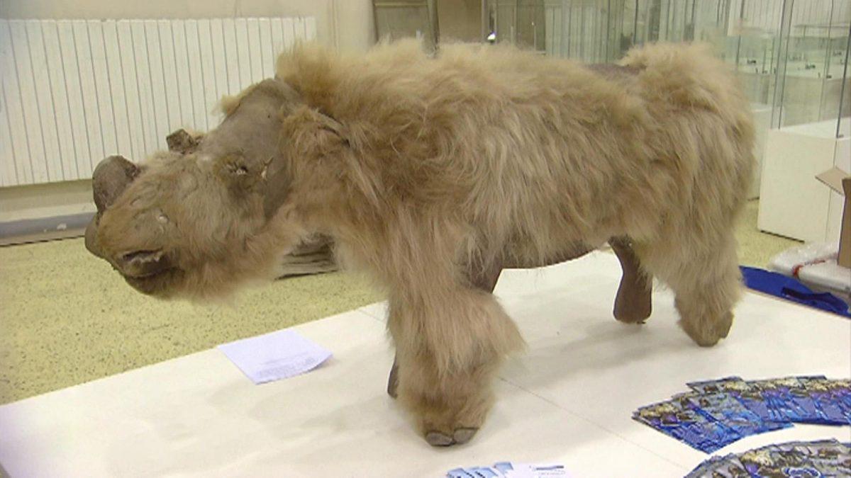 Под Иркутском нашли кости шерстистого носорога, а в США хотят воскресить мамонтов